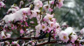 Гагаузия: ущерб от апрельского снегопада оценили почти на 80 млн леев