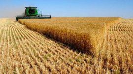 В 2017/18 МГ мировое производство пшеницы сократится на 15 млн тонн