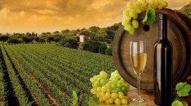 В каких районах самые трудолюбивые виноградари
