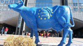 ЕС может увеличить производство молока на 0,6% по итогам 2017 года