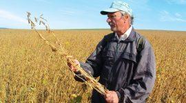 История, состояние и перспективы выращивания сои в Молдове