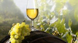 Агробиология и элементы агротехники аборигенных сортов винограда в Молдове
