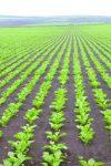 Реакция растений сахарной свеклы на динамику колебаний среднемесячных метеопараметров в условиях Молдовы