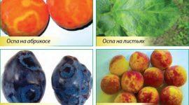 «Оспа» или «шарка» на косточковых породах