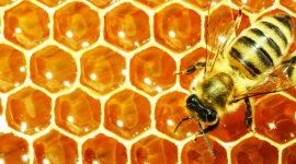 Пчеловоды – люди дружелюбные, уравновешенные и очень внимательные