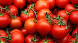 Разновидности томата по типу роста растений