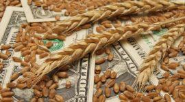 Цены на пшеницу в мире упали до десятилетнего минимума
