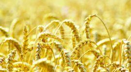 Реакция сельскохозяйственных культур на динамику изменений среднемесячных индикаторов тепловых ресурсов и режимов увлажнения